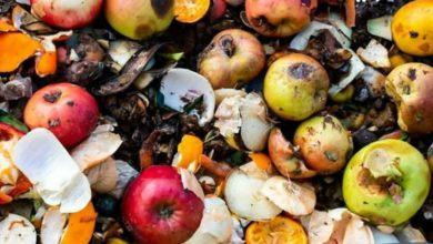 صورة تقرير أُممي يكشف عن هدر نحو مليار طن من الطعام سنوياً حول العالم