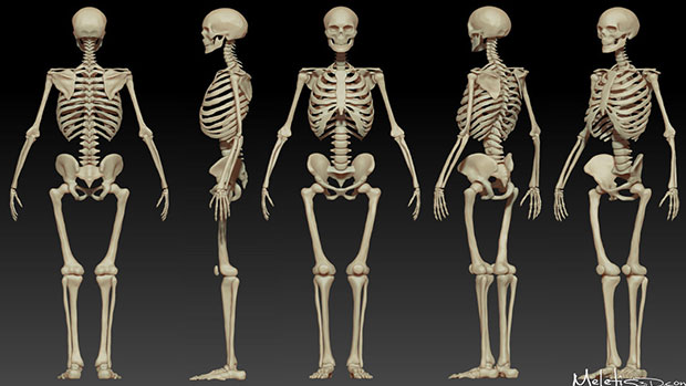 Photo of Study shows sedentary lifestyle made human bones lighter