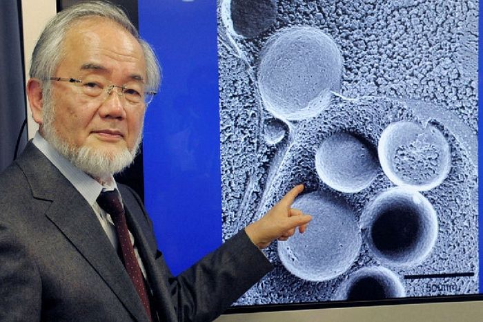 Photo of 2016 Nobel Prize winner scientifically proves that fasting is good for health