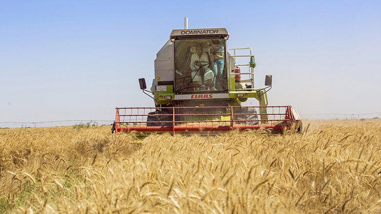 تصویر آغاز برداشت گندم و جو از مزارع آستان مقدس حسینی