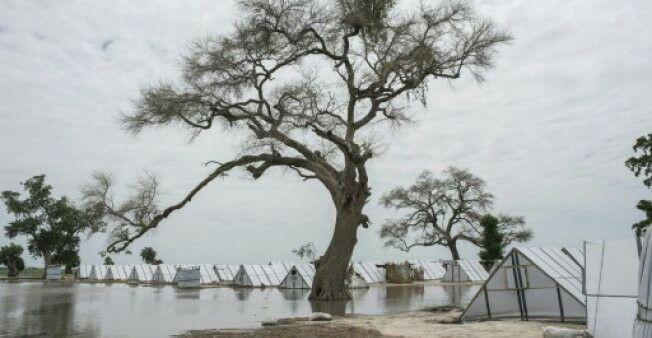 تصویر هر روز ۱۵ هزار نفر در آفریقا آواره میشوند