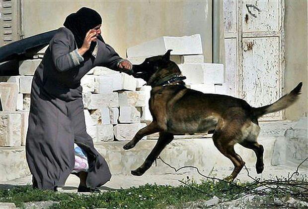 تصویر نژادپرستان آلمانی سگشان را به جان زن و مرد مسلمان انداختند