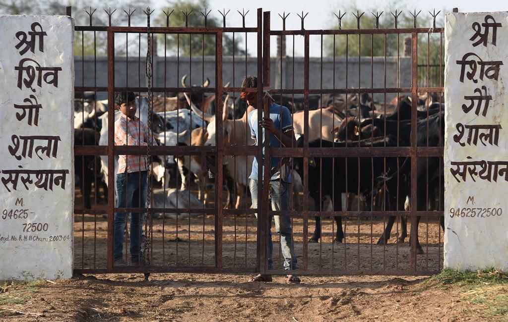 تصویر یک مرد مسلمان در هند به اتهام ذبح گاو توسط اوباش به قتل رسید