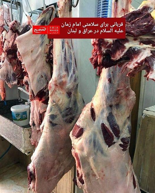 تصویر قربانی برای سلامتی امام زمان علیه السلام در عراق و لبنان