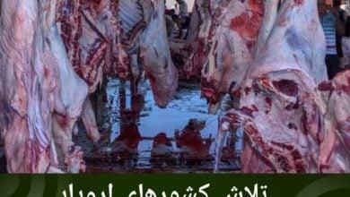 تصویر تلاش کشورهای اروپایی برای ممنوعیت گوشت حلال