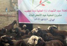 تصویر قربانی کردن بیش از 1650 گوسفند توسط کمیته جهانی حضرت سیدالشهدا علیه السلام
